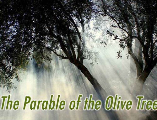 The Parable of the Olive Tree in Jacob 5