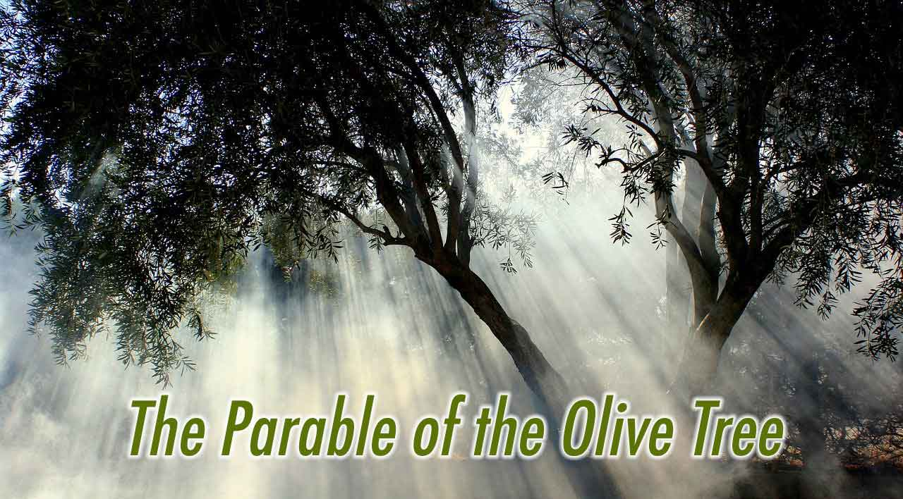 the parable of the olive tree